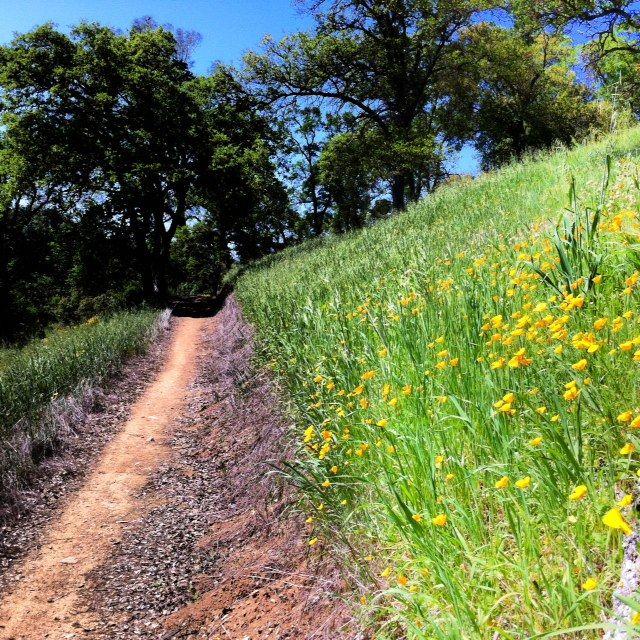 Hike this:  Poppy paradise