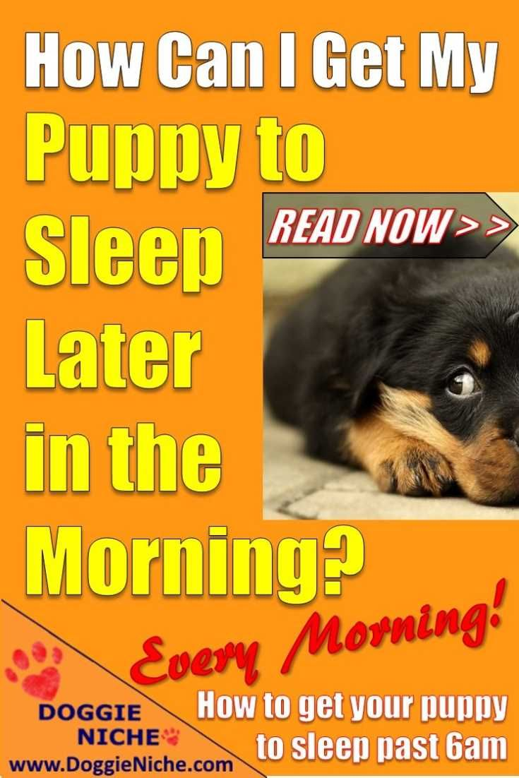 How To Get Your Puppy To Sleep Past 6am Dogs And Kids Puppies Really Cute Puppies