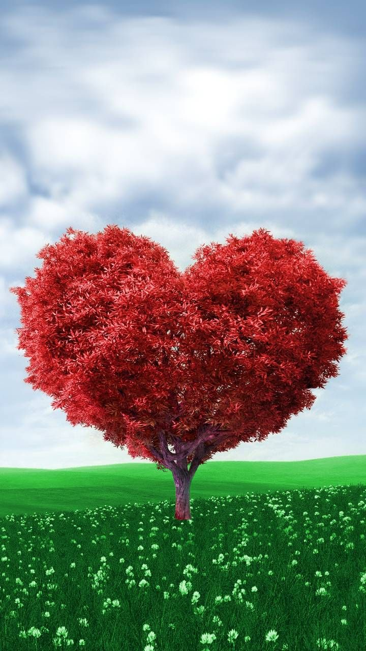Download Tree Heart Wallpaper By Dathys 50 Free On Zedge Now Browse Millions Of Popular Tree Heart Wallpaper Beautiful Photography Nature Heart Wallpaper Cute photography zedge wallpaper