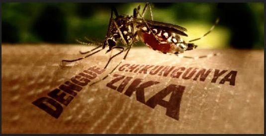Apa Itu Virus Zika? dan Bagaimana Cara Pencegahannya ? Simak Disini ! | Dokter Galau | Situs Informasi Kecantikan dan Kesehatan Terlengkap