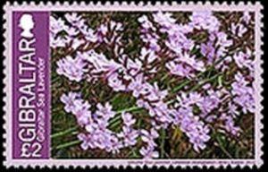 Gibraltar Sea Lavender