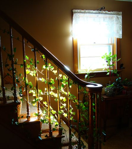 Vine growing up the stair rail house plants love indoor gardening pinterest house - House plants vines ...