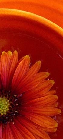 orange.quenalbertini: Orange in orange