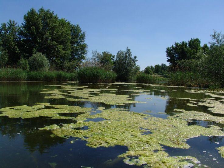 Žitný ostrov Slovakia