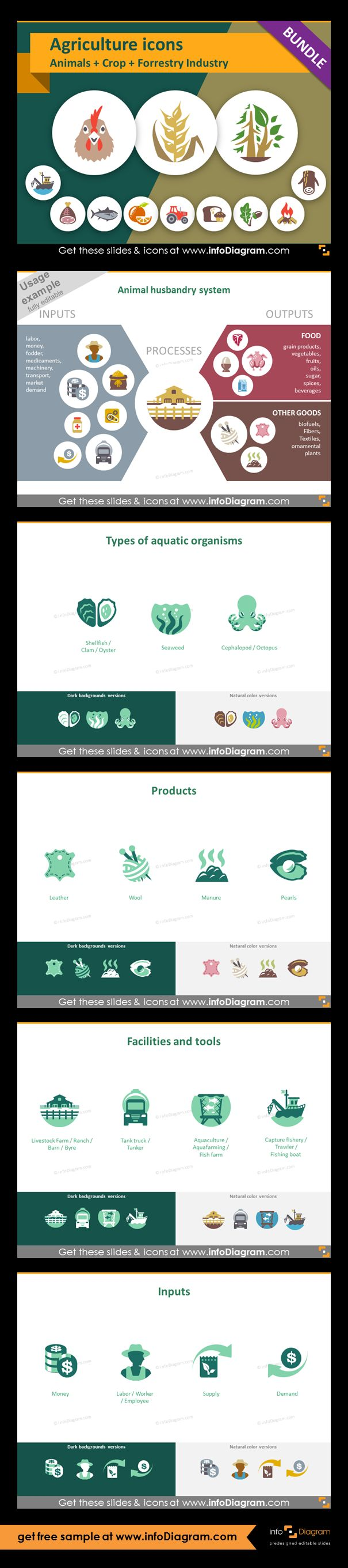 Food and Agriculture icons: Animals, Crop Cultivation, Forestry. All symbols in simple flat style, suitable for Metro UI style graphics. Icons provided in 5 versions. Slide presenting animal husbandry system. Types of aquatic organism and icons of fish, shrimp, crab, shellfish, seaweed, octopus. Products of animal husbandry and fishery: leather, wool, manure, pearl.. Animal husbandry and fishery facilities and tools. Clip arts of livestock farm, tank truck, aquaculture, fishing boat.