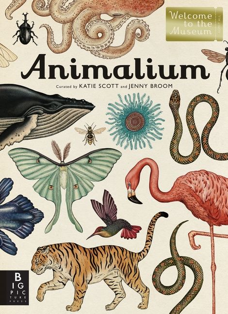 Possibly the most beautiful book I have ever seen. Animalium by Jenny Broom and illustrated by Katie Scott.