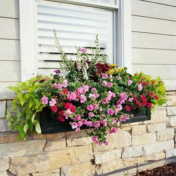 Pick Easy-Growing Plants: Idea, Sweet Potatoes Vines, Window Planters, Curb Appeal, Flowers Boxes, Front Window, Planters Boxes,  Flowerpot, Window Boxes