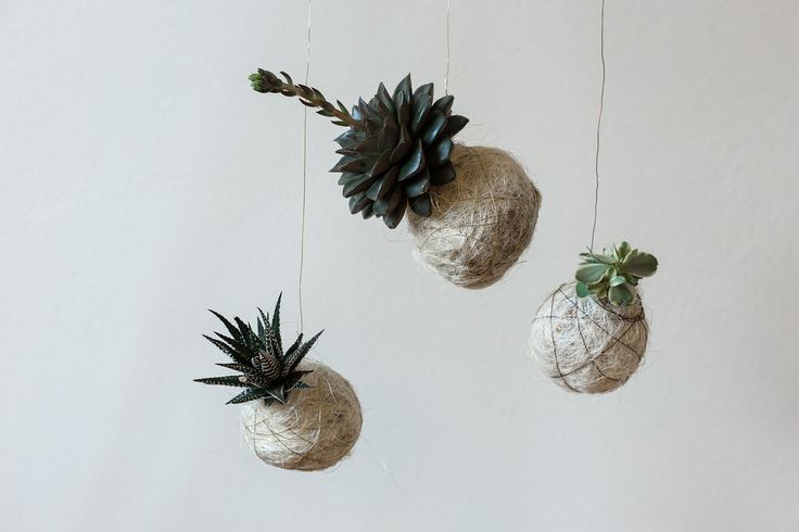 Svävande plantor | Anna María Larsson