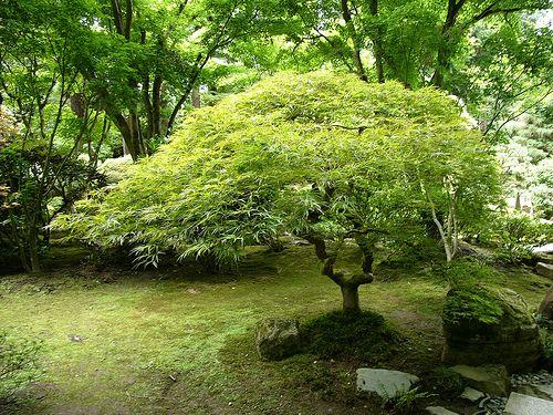 Japanese Garden 2006