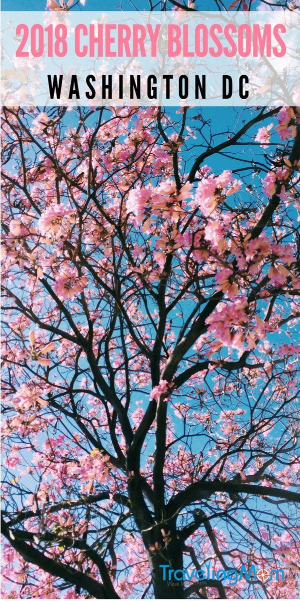 Cherry Blossom 2021 Season In Washington Dc Travelingmom Family Travel Destinations Washington Dc Vacation Trips
