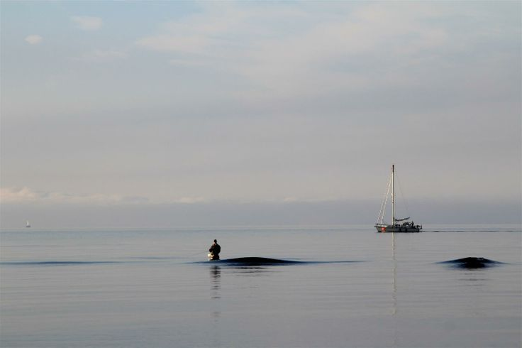 September morning on Møn: Alone on the reef ... well, nearly alone ;-)