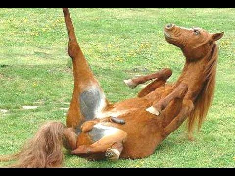 Top 10 Funny Horse Videos Compilation 2014 [NEW] - YouTube
