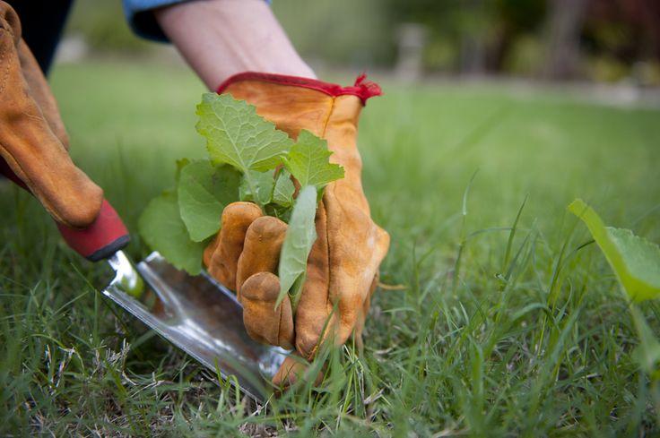 Ces trucs maison sont redoutables et efficaces pour éliminer tous les types de mauvaises herbes!