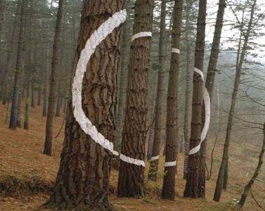 Círculo blanco con forma de hueco  Bosque de Oma de Agustín Ibarrola. (El bosque pintado)