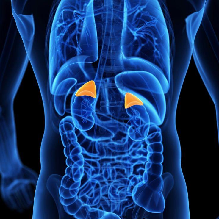 die besten 25+ adrenal gland symptoms ideen nur auf pinterest
