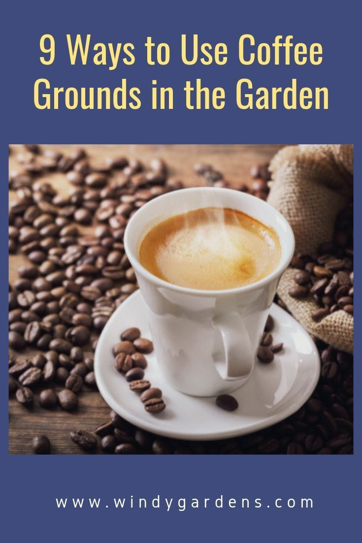 We Love Our Morning Cup Of Coffee Did You Know You Can Use The Spent Coffee Grounds In Your Garden Th Uses For Coffee Grounds Coffee Grounds Soil Improvement