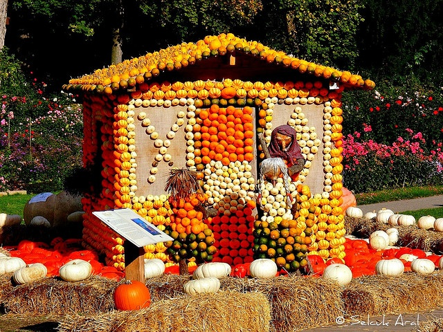 112 Best Gardenhouses Sheds Greenhouses Outhouses Images On Pinterest Out House Funny Images
