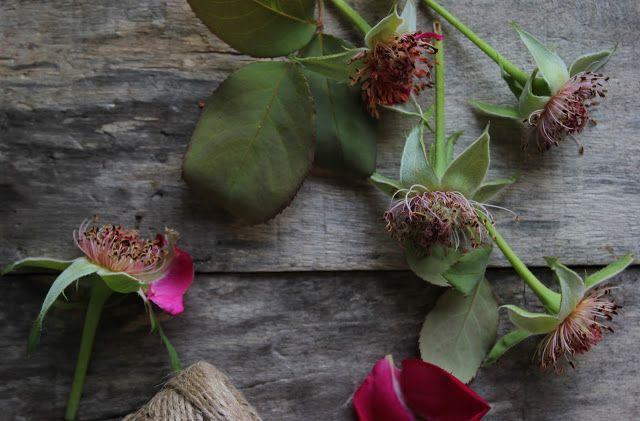 Vanilla&Staubzucker: Rose-water syrup – Sciroppo di acqua di rose – Sirup od ružine vodice