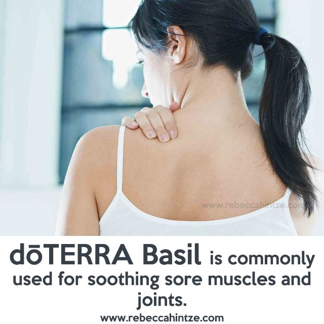 #dōTERRA #Basil is commonly used for #soothing #sore #muscles and #joints.  #RebeccaHintze #winter #winterache #musclerelief #natural #allnatureal #wellness #eo #essentialoil