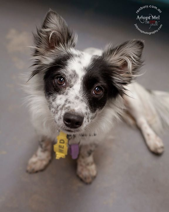 Who wants to add this beauty to their family? Well she is out at Renbury Farm Animal Shelter if you'd like to meet her this weekend. They are open from 9am until 4pm all long weekend. She is the sweetest little girl... she isn't microchipped and has recen | by Jo Lyons Photography