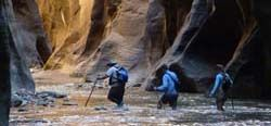 The Narrows is the narrowest section of Zion Canyon. This gorge, with walls a thousand feet tall and the river sometimes just twenty to thirty feet wide, is one of the most popular areas in Zion National Park.