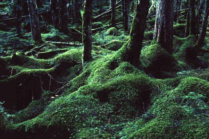 まるでジブリの世界!コケが埋めつくす美しい森〜長野「苔の森」