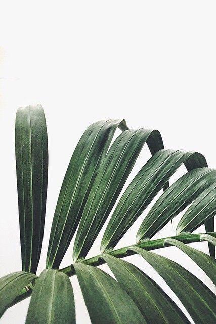 #greenary #greenaryfloral