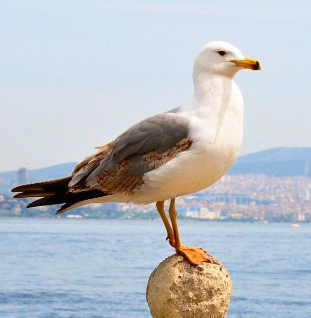 1000+ Images About Birds At The Beach On Pinterest