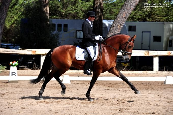 Alter Real stallion Zaoto