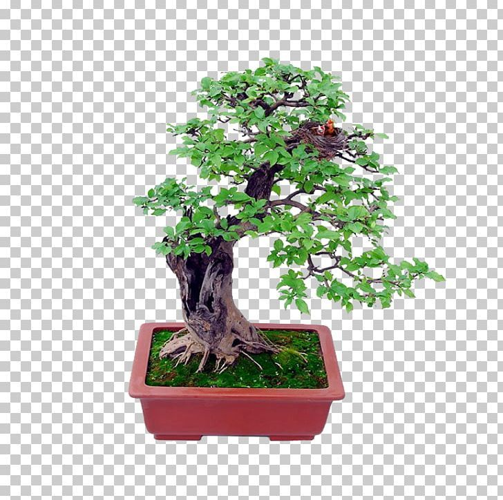 Bonsai Tree Png Art Bonsai Bonsai Tree Desktop Wallpaper Encapsulated Postscript Bonsai Tree Bonsai Tree Desktop Wallpaper