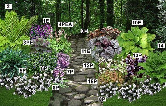 Massif couvre sol mi ombre pr sentation gardening for Organiser un jardin fleuri