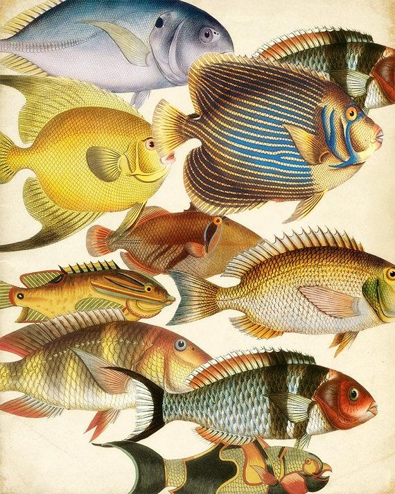 Carta Añeja de DOS caras de Colorea de Piscicultura Tropicales y Plantas Acuáticas Colores de Piscicultura Tropicales