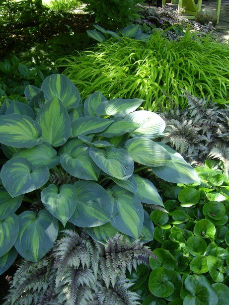 hostas, ferns, hakone  grass