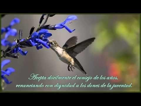 Desiderata (Poema en Español) - YouTube