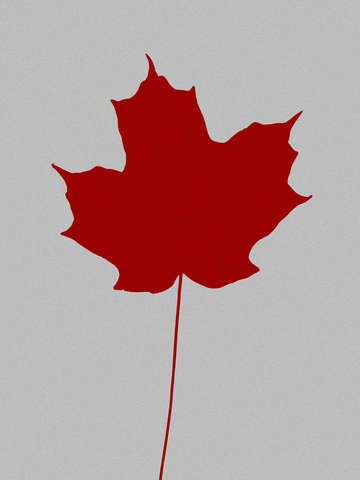 Check out 'Leaf de jour' by Bruce Stanfield on TurningArt