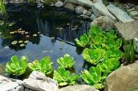 Most of the first-time pond owners decide to construct their ponds using EPDM pond liner as PVC and Plastic pond liners sold at garden stores are not durable and tear easily.