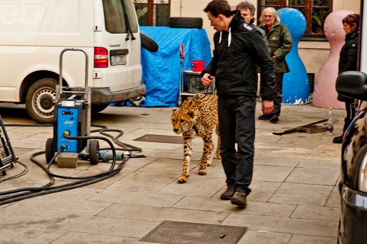Making of a new Mattoni spot // 2014 #behindthescenes #makingof #backstage #carlsbad #filming #advertising #ad #spot #tv #luxury #mattoniwater #cheetah #wildlife