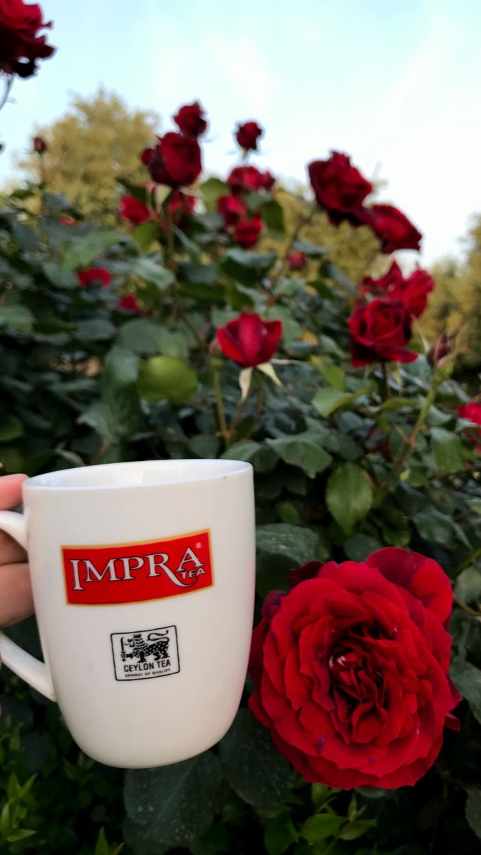 كوب شاي Tea Planter Pots Planters
