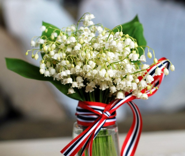 Liljekonvall by ~SerendipityCat~ via Flickr. Lily of the Valley - the most beautiful flowers