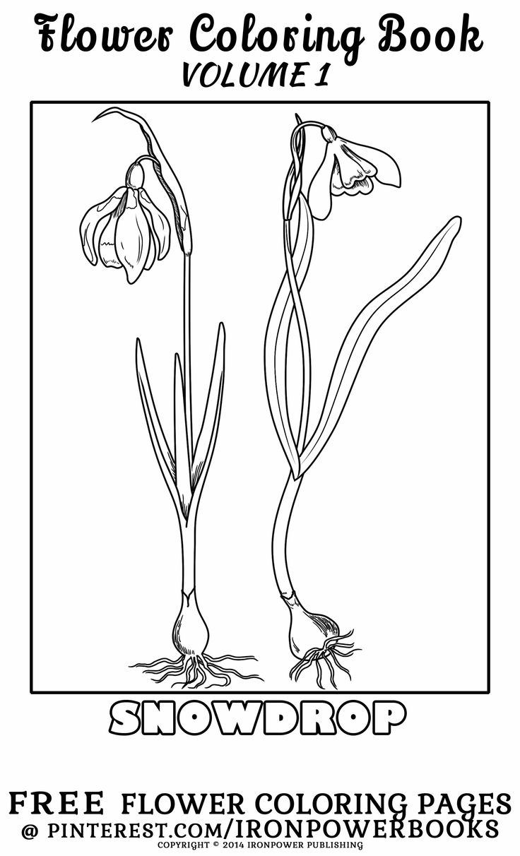 Free coloring pages of flowers - Free Flowers Coloring Pages Ironpowerbooks Snowdrop Flower Coloring For Kids Freecoloringpages From