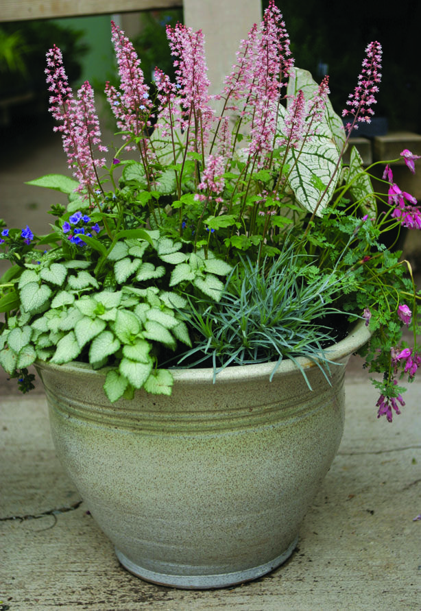 Shade perennial combo pot. Great texture.