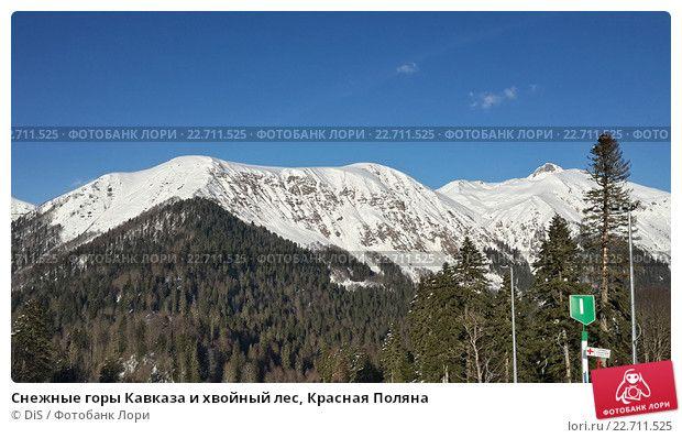 Снежные горы Кавказа и хвойный лес, Красная Поляна © DiS / Фотобанк Лори