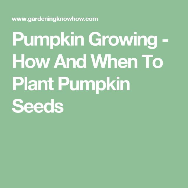 Pumpkin Growing - How And When To Plant Pumpkin Seeds