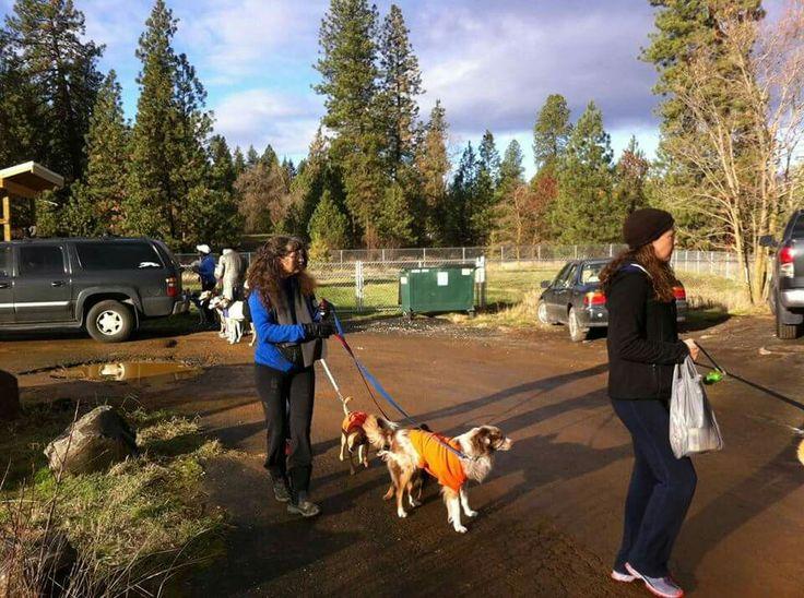SpokAnimal's Dog Park at High Bridge | Favorite Places ...