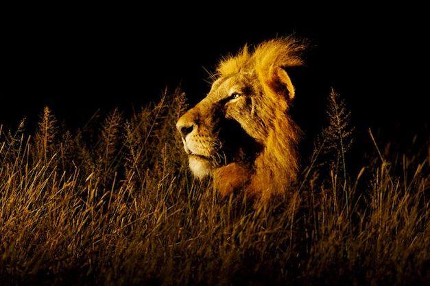 FOURTH : Lee Slabber – Lion