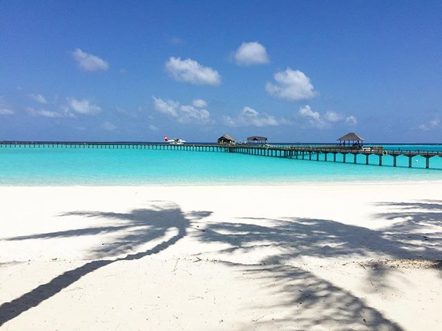 #shadowpalms #palmtrees #palms #cdlovermoon #maldives #seaplane #beach