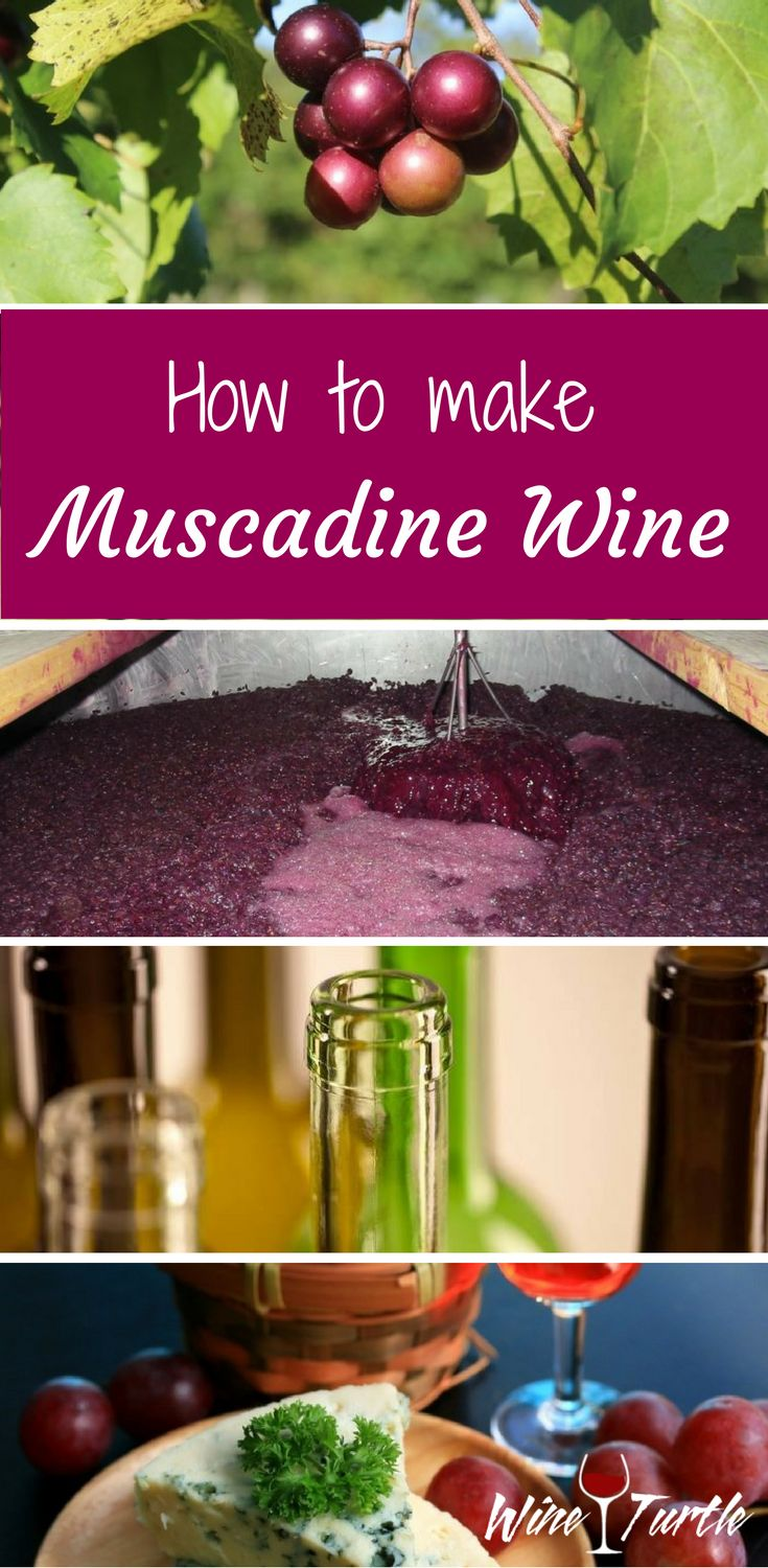 Looking for a great muscadine wine recipe? Check this out!