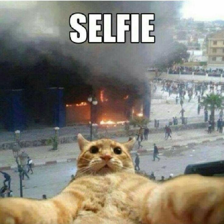 Yum...toasted kitty :) LOL. More LOL at http://alienhaha.com