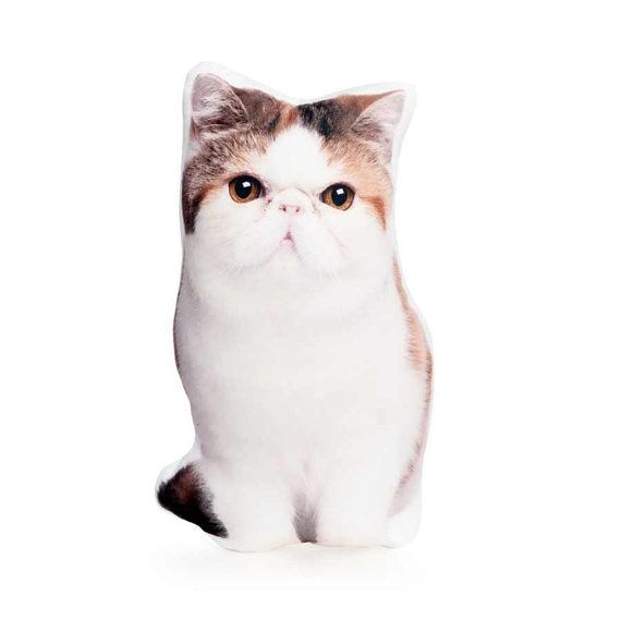 Exotic Short haired Cat Lovers Glamour Puss Teen Girl Gift
