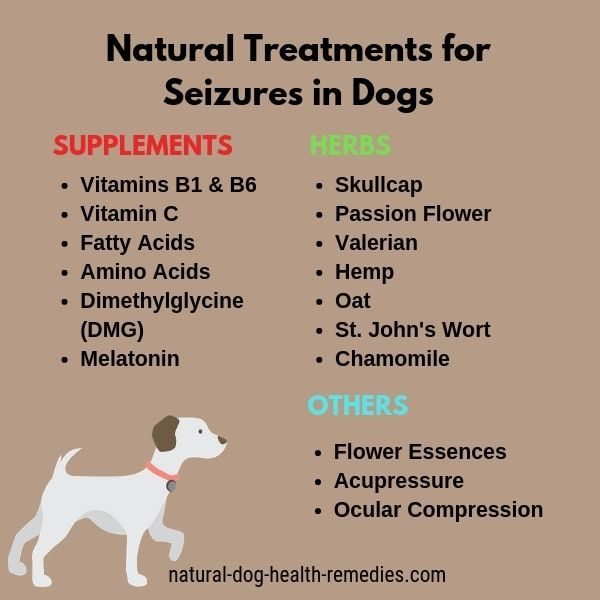 Natural Canine Seizure Remedies Epilepsy In Dogs Dog Health